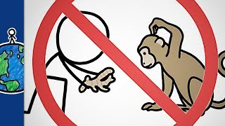 Download Why You Shouldn't Give Ginger To Monkeys (and other animal sayings) Video