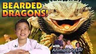Download BEARDED DRAGONS! Pet Reptiles with EvanTubeHD & AnimalBytesTV! Video