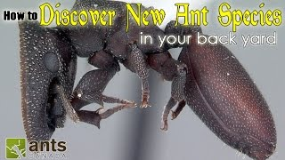 Download HOW TO DISCOVER A NEW SPECIES OF ANT | featuring Dr. Brian Fisher Video