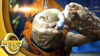 Download Halo: Last Grunt Alive Trailer Video