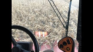 Download What's in the Corn Field Now? Video
