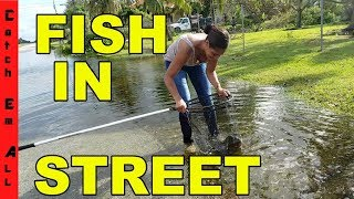 Download FISHING in THE STREET! Catching EXOTIC Fish in HURRICANE FLOODING! Video