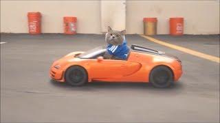 Download Aaron's Animals NEW BEST VIDEO COMPILATION 2017    FunnyVines Video