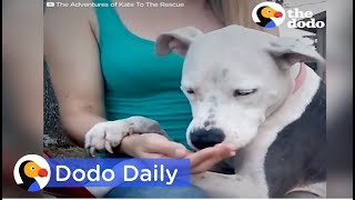 Download Dog Rescue: Dog Tied Up for Weeks After Owner Passes: Best Animal Videos   The Dodo Daily Video