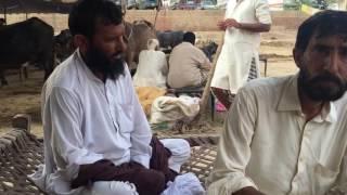 Download Mandi chichawatni Youns Gujjar Video