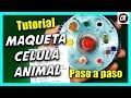 Download CÓMO HACER UNA CÉLULA ANIMAL Y SUS PARTES | Partes de la célula | Cómo reciclar CDs Video
