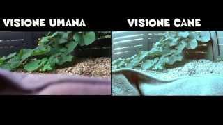 Download Il mondo visto con gli occhi degli animali Video