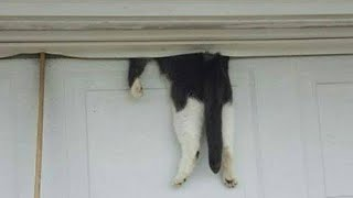 Download Cop responds to call and finds cat hanging from garage door – owner finally returns during rescue op Video