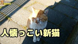 Download 【野良猫】人懐っこい新猫 Video