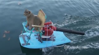 Download Homemade Jet Ski - Aarons Animals Video