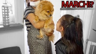 Download DID WE FINALLY FIND OUR LOST PUPPY MARCH POM | Familia Diamond Video