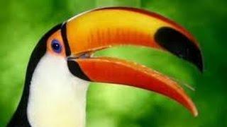 Download Illegal Wildlife Trade Part 1 - English Subtitles - TvAgro por Juan Gonzalo Angel Video