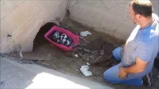 Download Destiny - Female Stray Gave birth to 7 little puppies in a culvert. Video