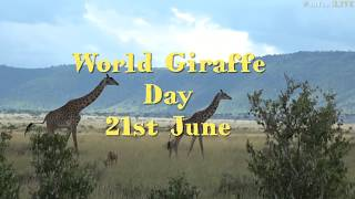 Download WE celebrate World Giraffe Day with a closer look at the supermodels of the wilderness! Video