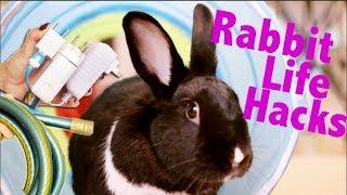 Download Rabbit Life Hacks Video