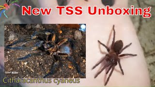 Download Stunning New Tarantula - Spider Confusion! Video