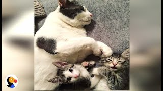 Download BEST Cat Dad Helps Feral Kitten Get Adopted | The Dodo Video