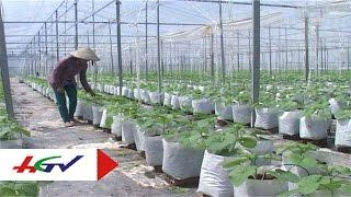 Download Mô hình trồng dưa lưới trong nhà kính | HGTV Video