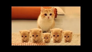Download So many cute kittens videos compilation 2018 Video