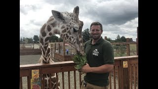 Download Animal Adventures with Jordan: Reticulated Giraffe Video