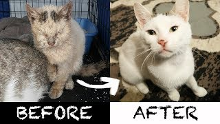 Download 2 AMEOWZING Homeless Cat Transformations! Video
