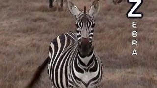 Download Animal Alphabet Song Video