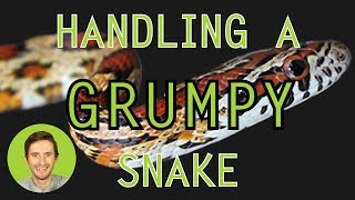 Download How to Handle a Grumpy Snake (Without Getting Bitten?) Video