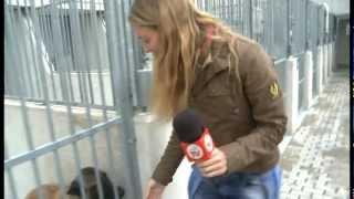 Download CODIGO 10-17 Centro Protección Animales de Madrid Video
