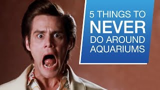 Download 5 Things You Should Never Do Around Your Aquarium Video