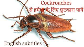 Download कॉक्रोच भगाने के जबर्दस्त उपाय How to get rid of cockroaches permanently | Anupama Jha Video