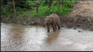 Download BABY ELEPHANT ESCAPES FROM HIS MOTHER TO DRINK Video