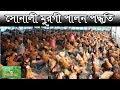 Download সোনালী মুরগী পালন পদ্ধতি - poultry farming in bangladesh Video