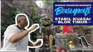 Download ABAH DOEFIR SUKSES: Seting MURAI BATU Stabil di BLOK TIMUR Video