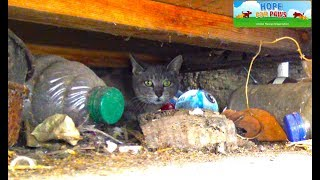 Download Mama cat wouldn't leave her babies behind. She took one, came back for the rest, and then... Video