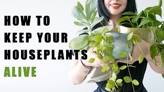 Download Do These Things To Keep Your House Plants Alive! Video
