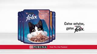 Download Purina Cat Chow - Campaña Argentina Video