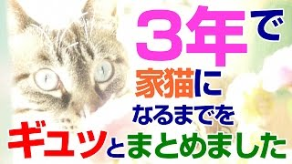 Download 【Jean 395】凶暴な保護猫ジャンくんの3年間をギュッとまとめました 元野良猫の保護里親記録 Jean, a former stray cat. Video