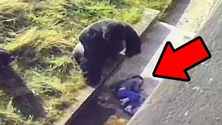 Download 5 Unbelievable Animals That Saved People's Lives Video