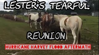 Download Tearful Reunion with pets after Hurricane Harvey Video