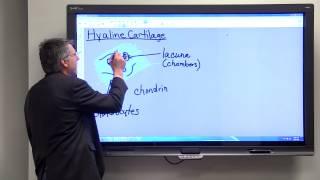 Download Hyaline Cartilage Video