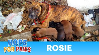 Download Rescuing a family of dogs with help from iPhone and You Tube. Please share. Video