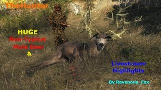 Download TheHunter - HUGE Non-Typical Mule Deer & Livestream Highlights Video