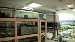 Download Ted's New Fishroom - Aquariums Video
