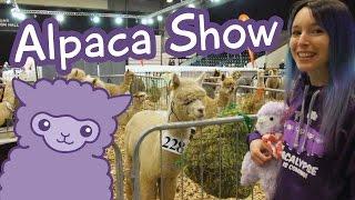 Download Alpaca Show - More alpacas than you've ever seen! Video