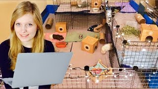 Download Reacting to my Subscribers Guinea Pig Cages Video