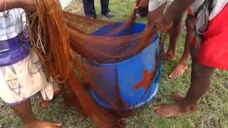 Download Big size Black Tiger Shrimp in Gazi Fish Culture Ltd., Khulna, Bangladesh Video