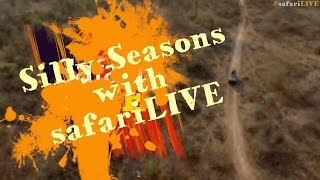 Download Silly season with #safariLIVE Video