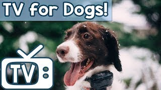 Download TV for Dogs & Anxiety Music - Videos for Dogs to watch - Relax Your Dog Nature Footage (New 2018) Video
