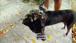 Download Cachorrinha adota filhotes órfãos de gambá Video
