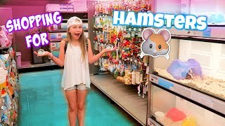 Download Getting 3 Hamsters! Shopping at Petco and PetSmart for Hamster Gear! Video